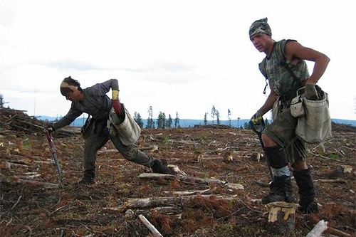 Tree Planters Working in the Field